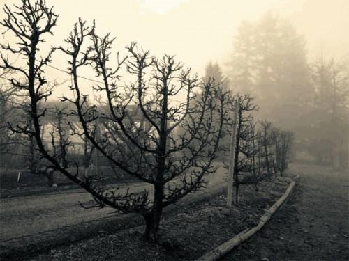 дерево ханукия на Хануку